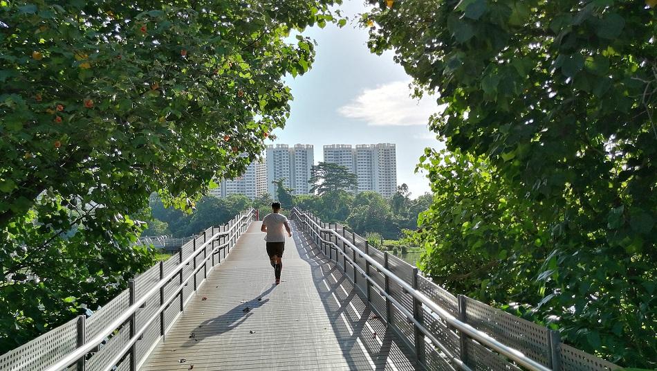 bridge-tree-man